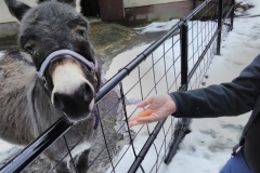 Charming Utica Zoo Donkey. Come visit me and my friends :)