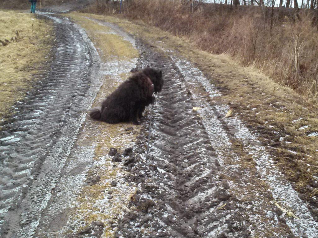 Herkimer meth bridge giant tire tracks